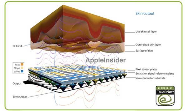 apple-preparerait-une-mise-a-jour-pour-le-touch-id-de-l-iphone-5s-600x359