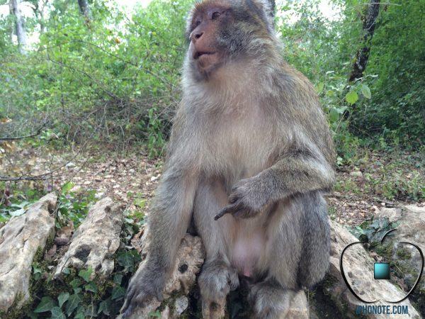 humour-quand-les-singes-sont-saoules-par-les-rumeurs-sur-l-iphone-6-2