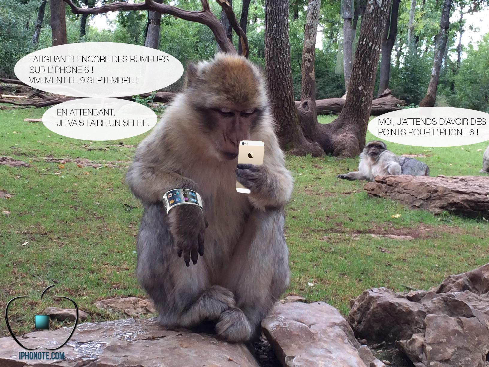 Humour : Quand les singes sont saoulés par les rumeurs sur l'iPhone 6