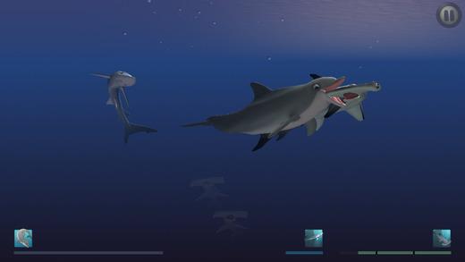 I-Am-Dolphin