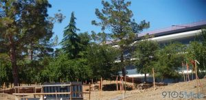De nouvelles photos de l'Apple Park avec une végétation omniprésente