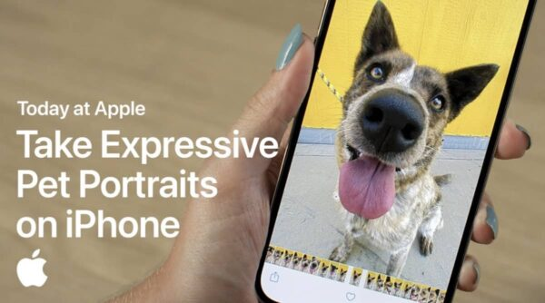 Today at Apple, portrait animaux